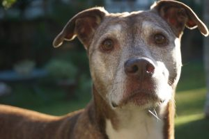 Senior Pups need love too