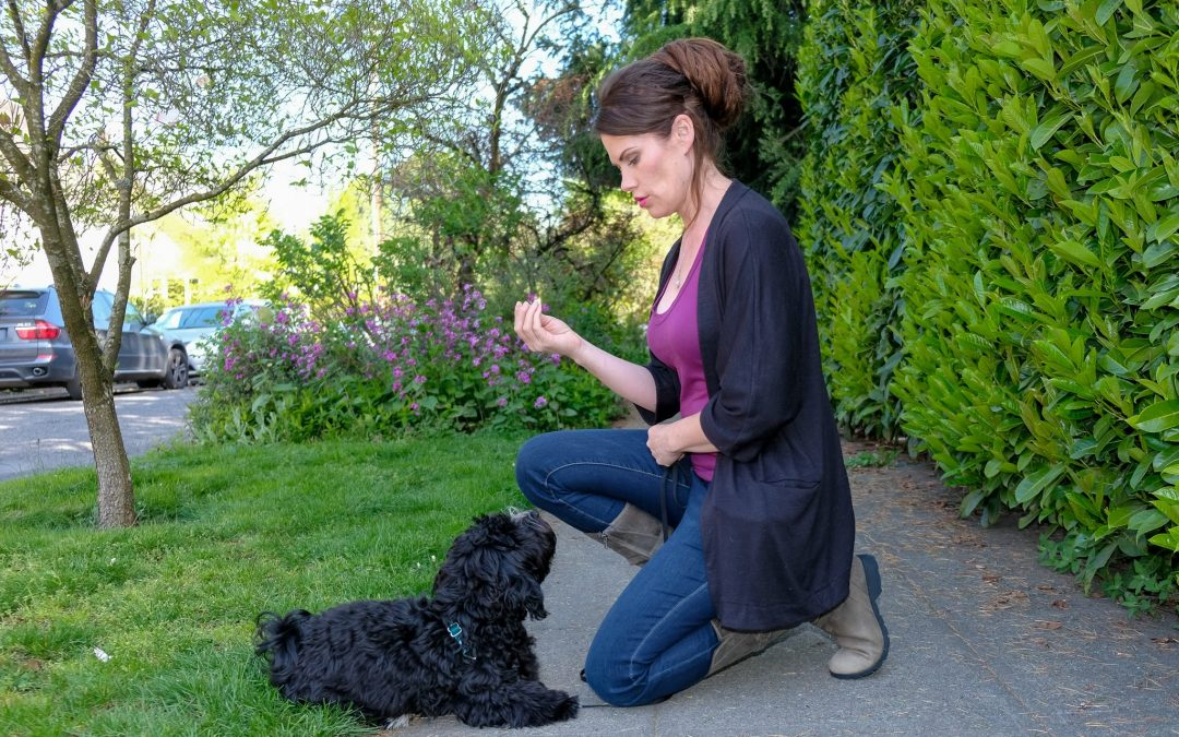 4 Reasons You Should Hire a Dog Trainer (Today)!