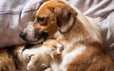 Seattle Pet Owners – Would Your Cat or Dog Benefit From CBD?