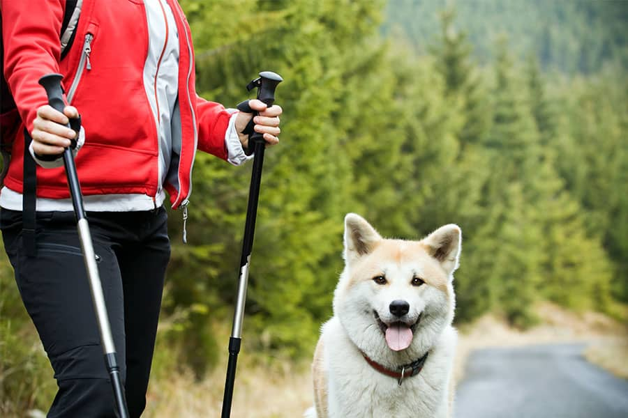 5 Great Dog Friendly Hiking Trails Near Seattle