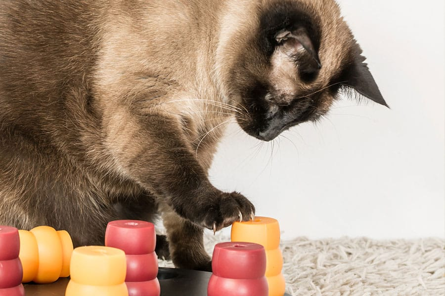 Enrichment Activities and Experiences for Your Cat