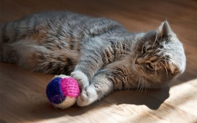 The Best Enrichment Activities and Experiences for Your Cat