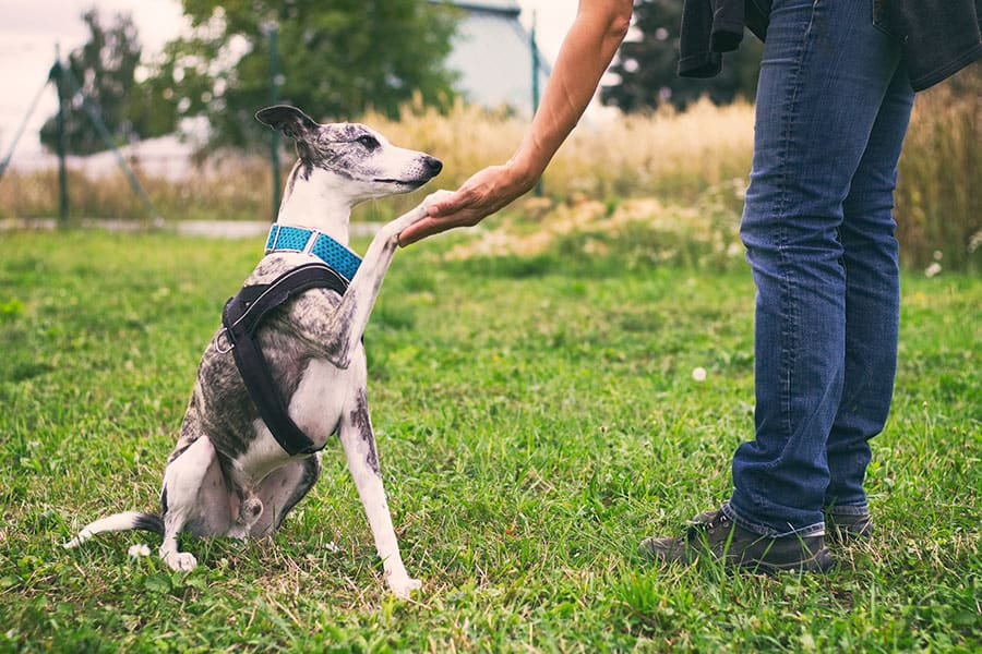 5 Ways to Handle Frustrations When Training Your Dog