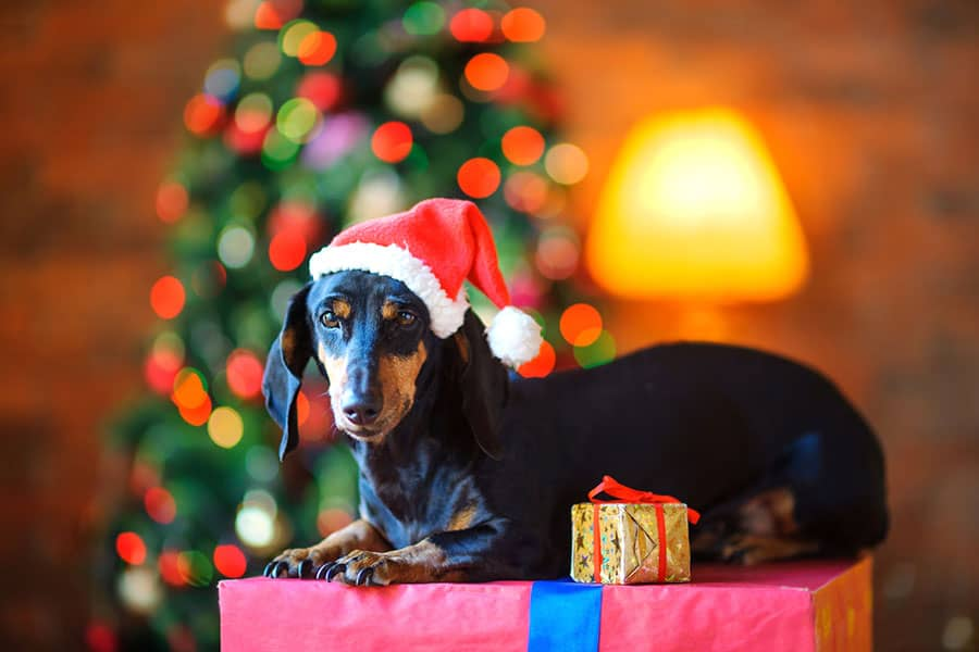 7 Holiday Activities in Seattle for You and Your Dog