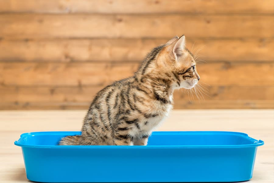 Four Cat Training Tips and Lessons