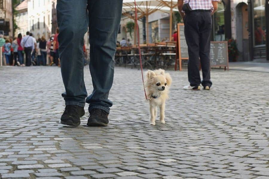 Reasons Your Dog Needs Daily Walks